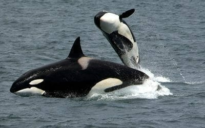Killer Whale Moms, Women's Wisdom, My Book Party, and more